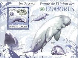 dugong 1
