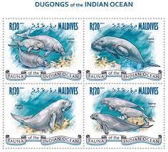 dugong2