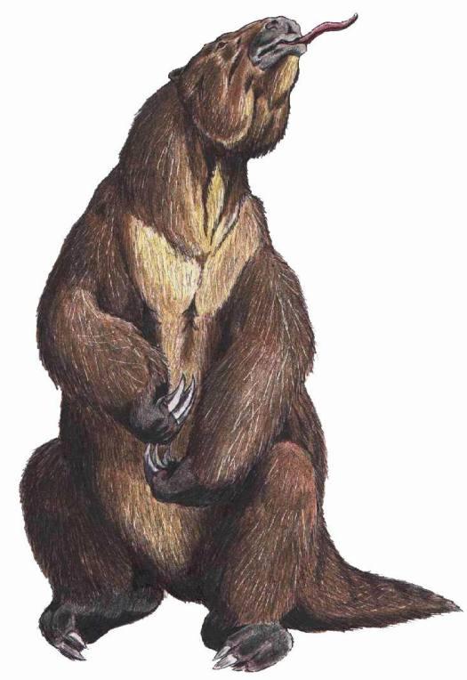 Megatherum_DB