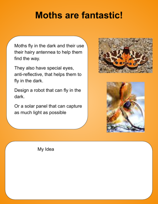 butterflies-biomimicry-4